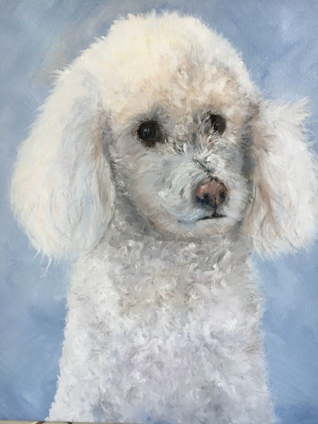 Floy the Poodle
